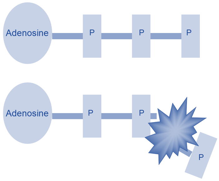 difference between atp turnover and atp resynthesis Assessing mitochondrial dysfunction in cells  flows through pmf and is then divided between proton leak and atp turnover  the rate of atp resynthesis can.