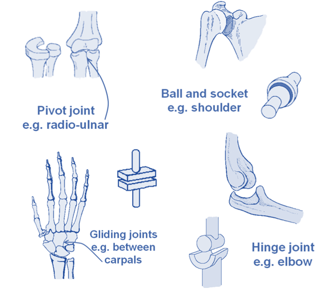 Level 2 Exercise And Fitness Knowledge 4joints Amac Training