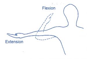 flex extend
