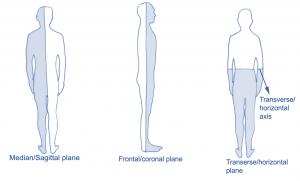 planes of movement