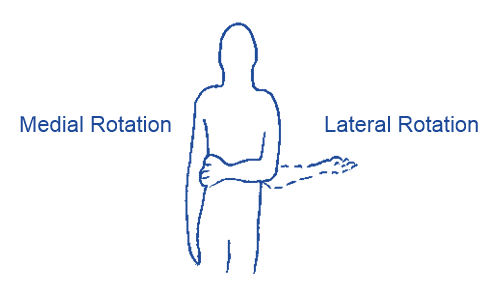 Muscle and Joint Movement: Washing a Plate
