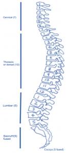 spine regions