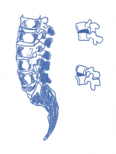 vertebrae movement