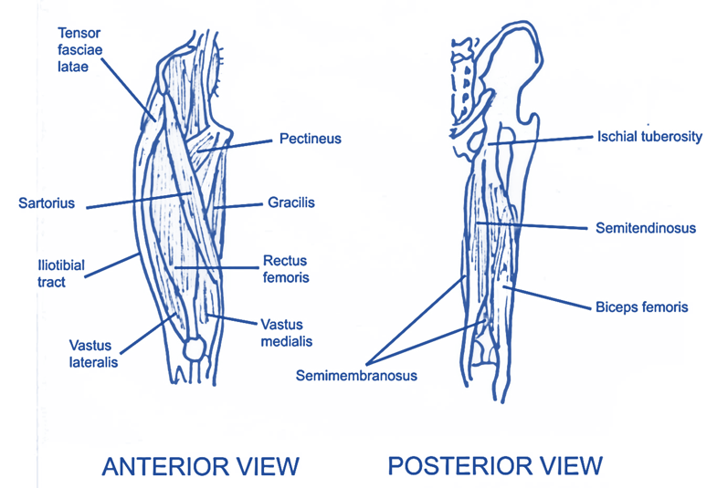 Level 3 73 Exercise And Fitness Knowledge The Knee Joint Amac