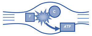 CP system