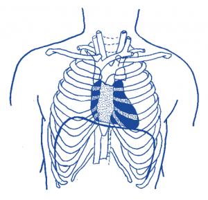 heart position