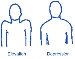 elevate depress