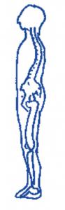 normal posture