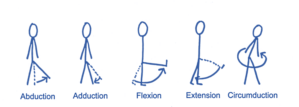 hip movements
