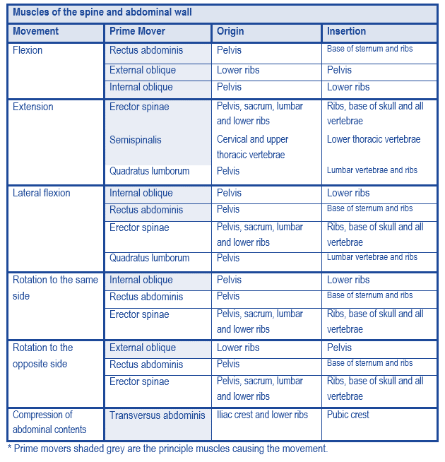 spine and ab muscle table